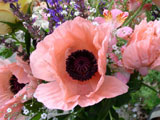[Oriental Poppy Arrangement]