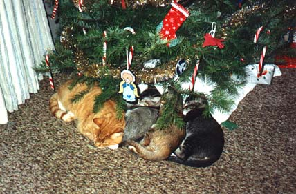 [Christmas Cats]